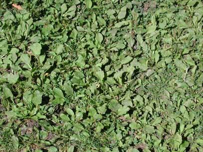 Grass, what grass