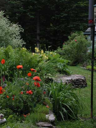 Poppies are one of the joys of late spring.