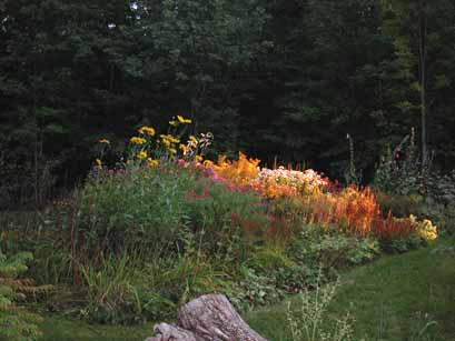 My garden glows just as the sun is setting.  It's my favourite time of day during the fall.